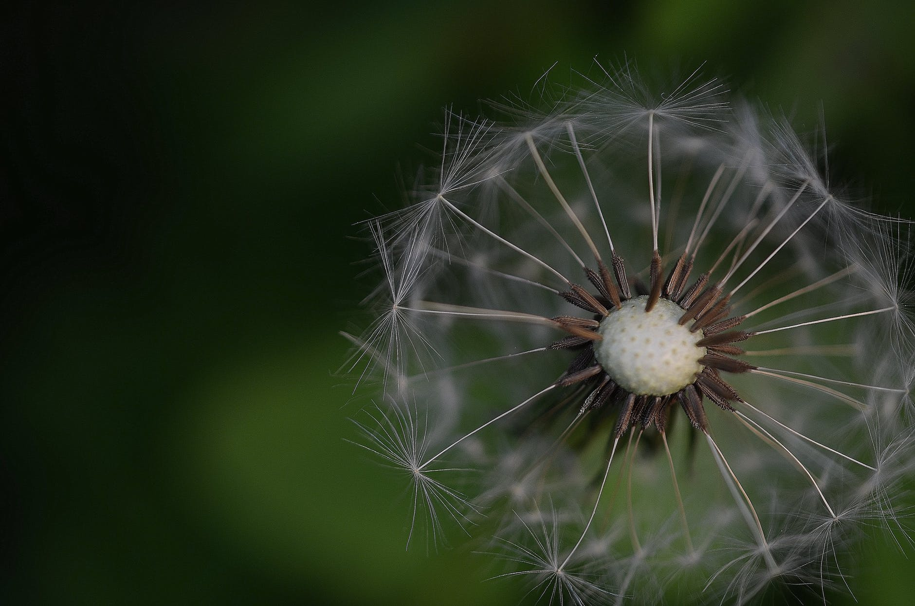 dandelion-colours-colour-green-63646